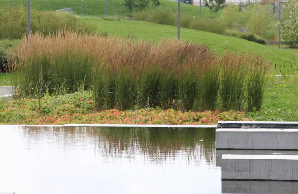 The nansen park area for Ornamental grass edging